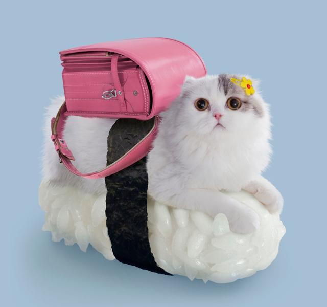 Gatos-sushi