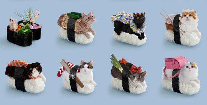 Gatos-sushi, lo último en Japón